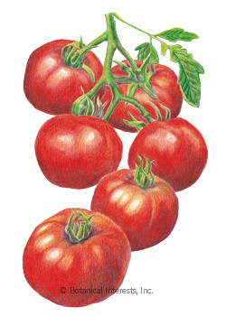 Tomato Pole Red Siberian HEIRLOOM Seeds