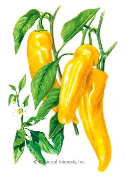Pepper Sweet Italian Marconi Golden HEIRLOOM Seeds