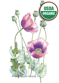 Poppy Bread Seed Hungarian Blue Organic HEIRLOOM Seeds