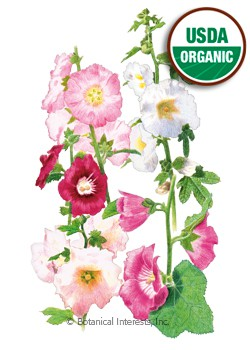 Hollyhock Outhouse Organic Seeds
