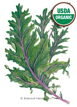 Kale Red Russian Organic HEIRLOOM Seeds