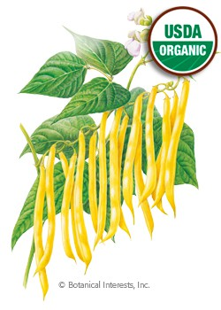 Bean Bush Gold Rush Organic Seeds
