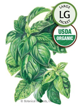 Basil Italian Genovese Organic HEIRLOOM Seeds (LG)