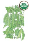 Bean Bush Baby Lima Henderson's Organic HEIRLOOM Seeds