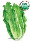 Lettuce Romaine Parris Island Organic HEIRLOOM Seeds